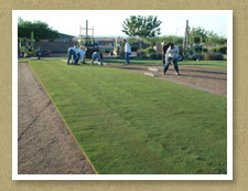 Fresh Arizona Sod at Poston Butte